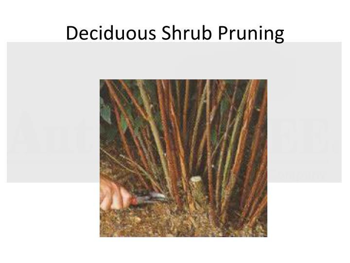 Deciduous Shrub Pruning