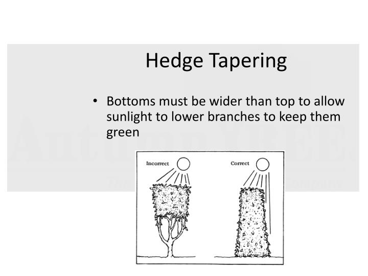 Hedge Tapering
