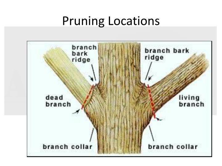 Pruning Locations
