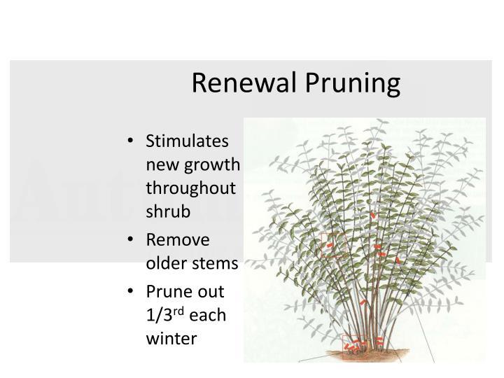 Renewal Pruning