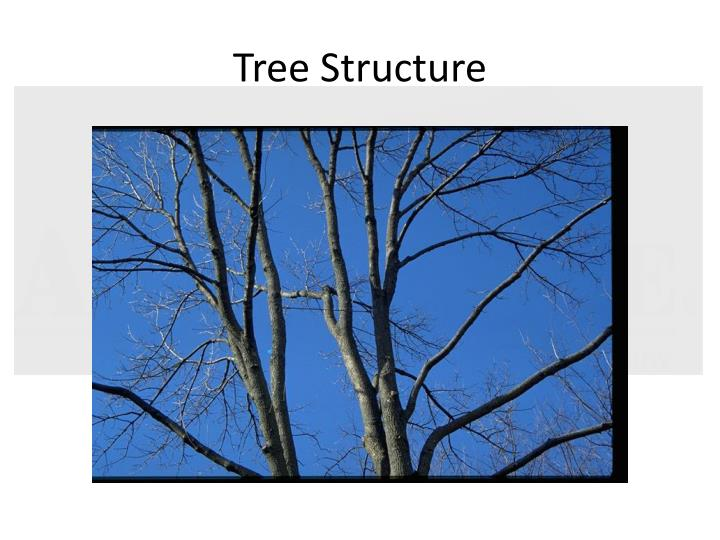 Tree Structure