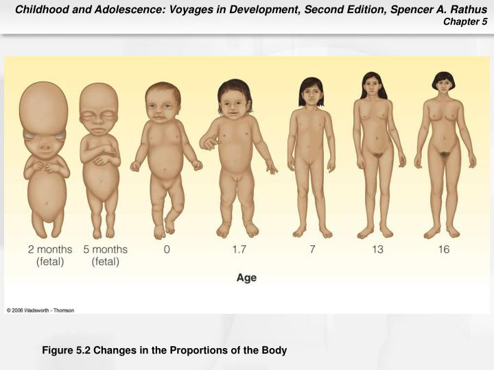 Figure 5.2 Changes in the Proportions of the Body