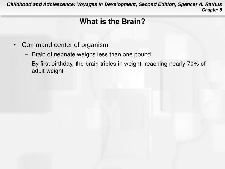 What is the Brain?