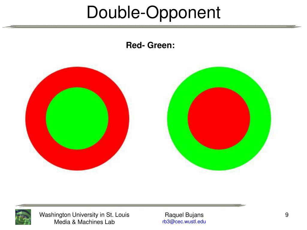 Double-Opponent