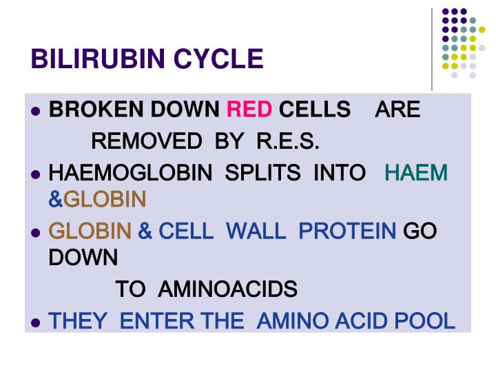BILIRUBIN CYCLE