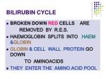 bilirubin cycle