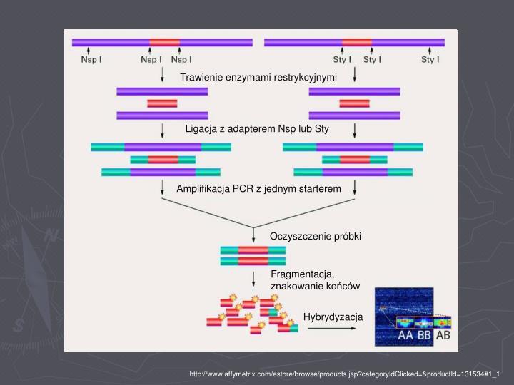 Trawienie enzymami restrykcyjnymi