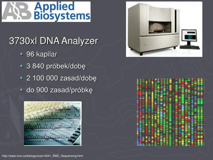 3730xl DNA