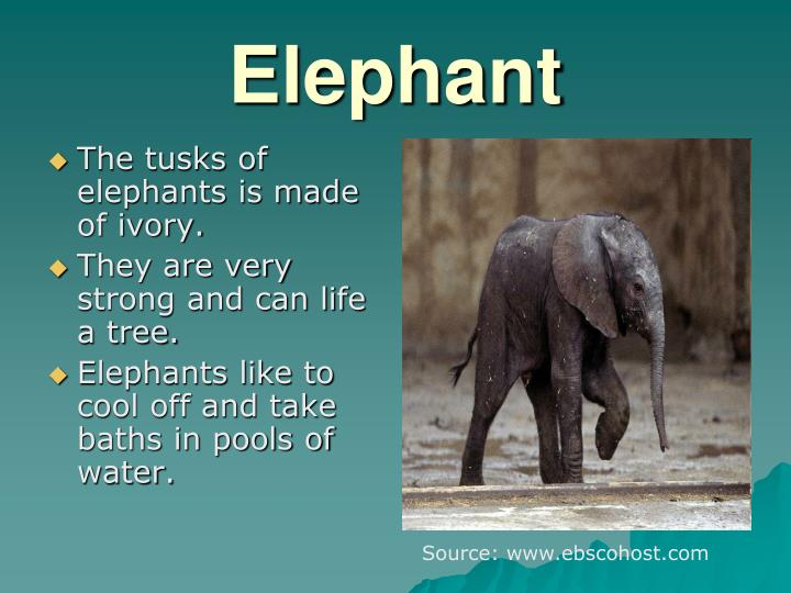 The tusks of elephants is made of ivory.