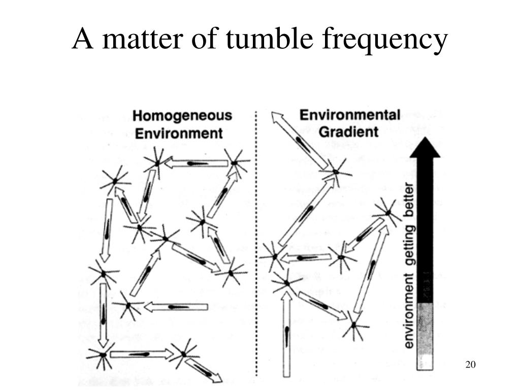 A matter of tumble frequency