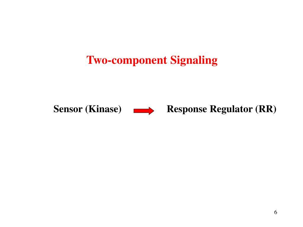 Sensor (Kinase)