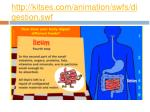 http kitses com animation swfs digestion swf4