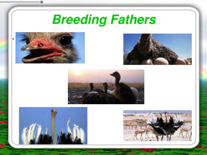 Breeding Fathers