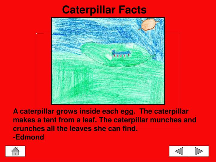 Caterpillar Facts