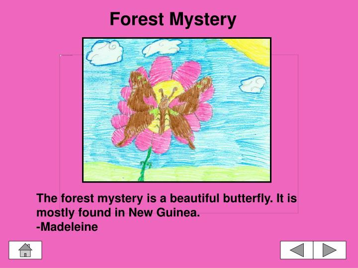 Forest Mystery