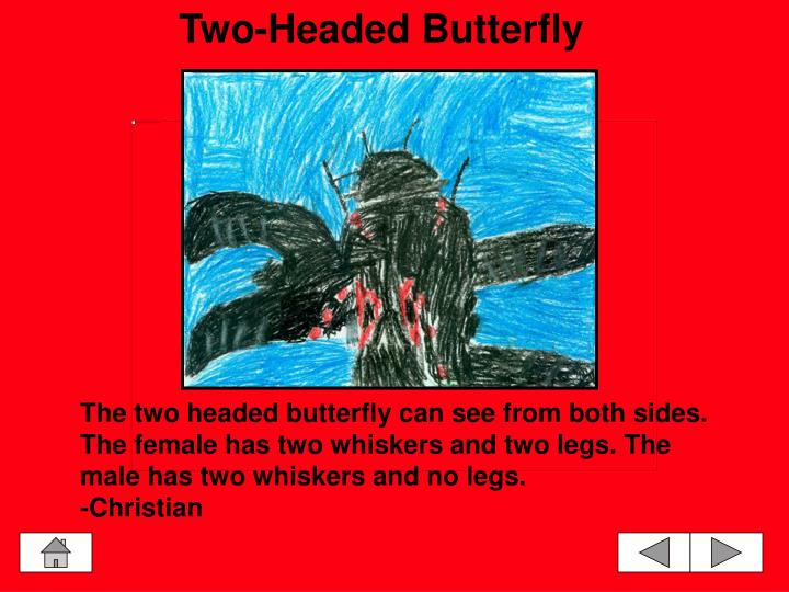 Two-Headed Butterfly