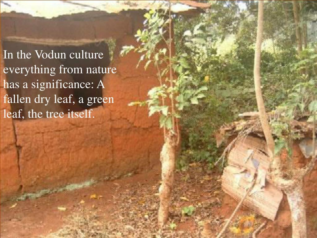 In the Vodun culture everything from nature has a significance: A fallen dry leaf, a green leaf, the tree itself.