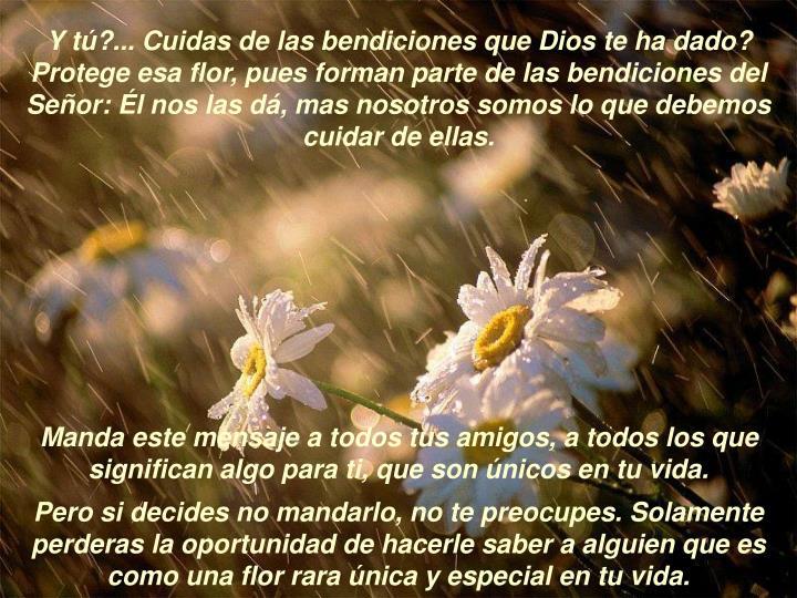 Y tú?... Cuidas de las bendiciones que Dios te ha dado? Protege esa flor, pues forman parte de las bendiciones del Señor: Él nos las dá, mas nosotros somos lo que debemos cuidar de ellas.