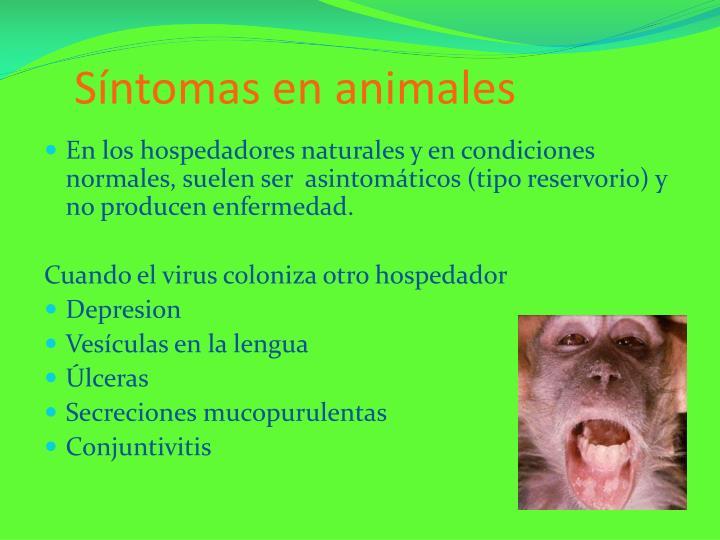 Síntomas en animales