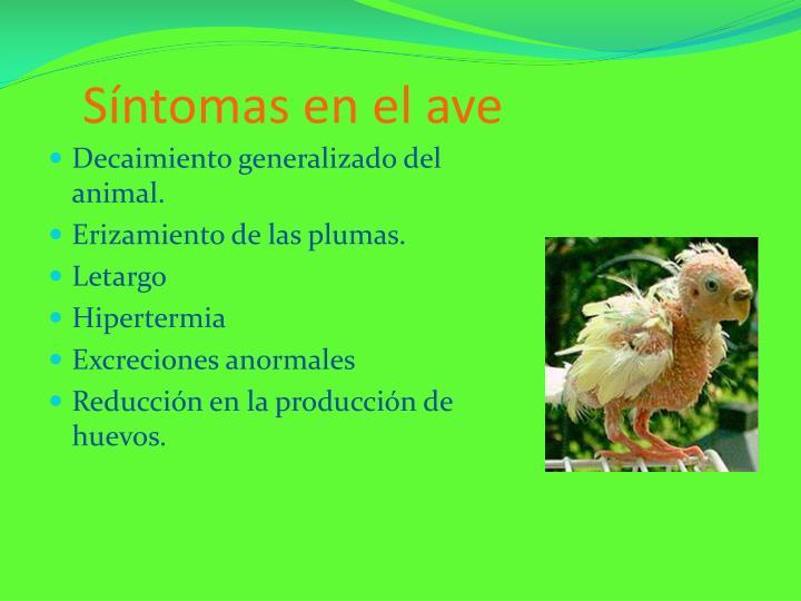 Síntomas en el ave