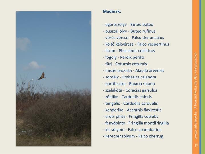 Madarak: