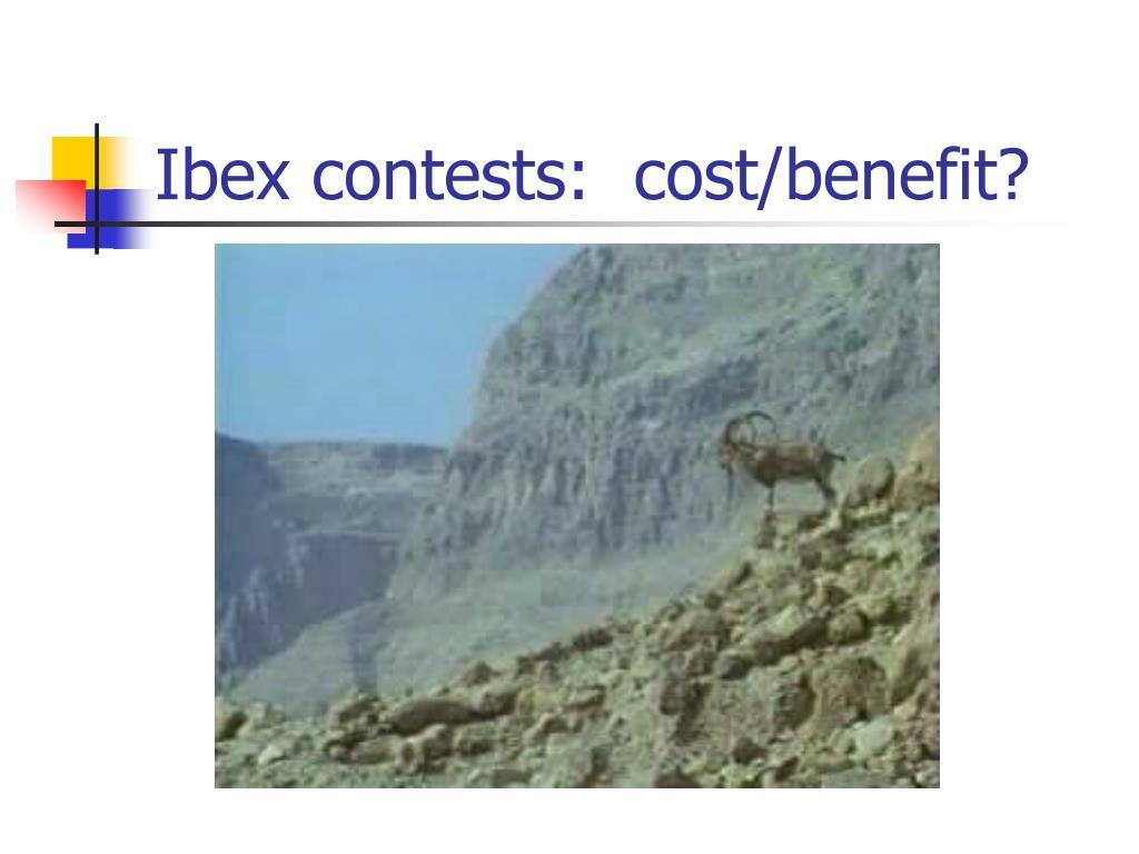 Ibex contests:  cost/benefit?