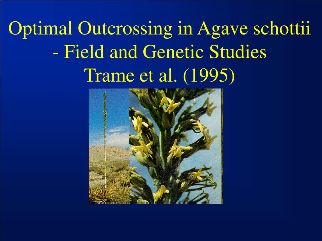 Optimal Outcrossing in Agave schottii - Field and Genetic Studies