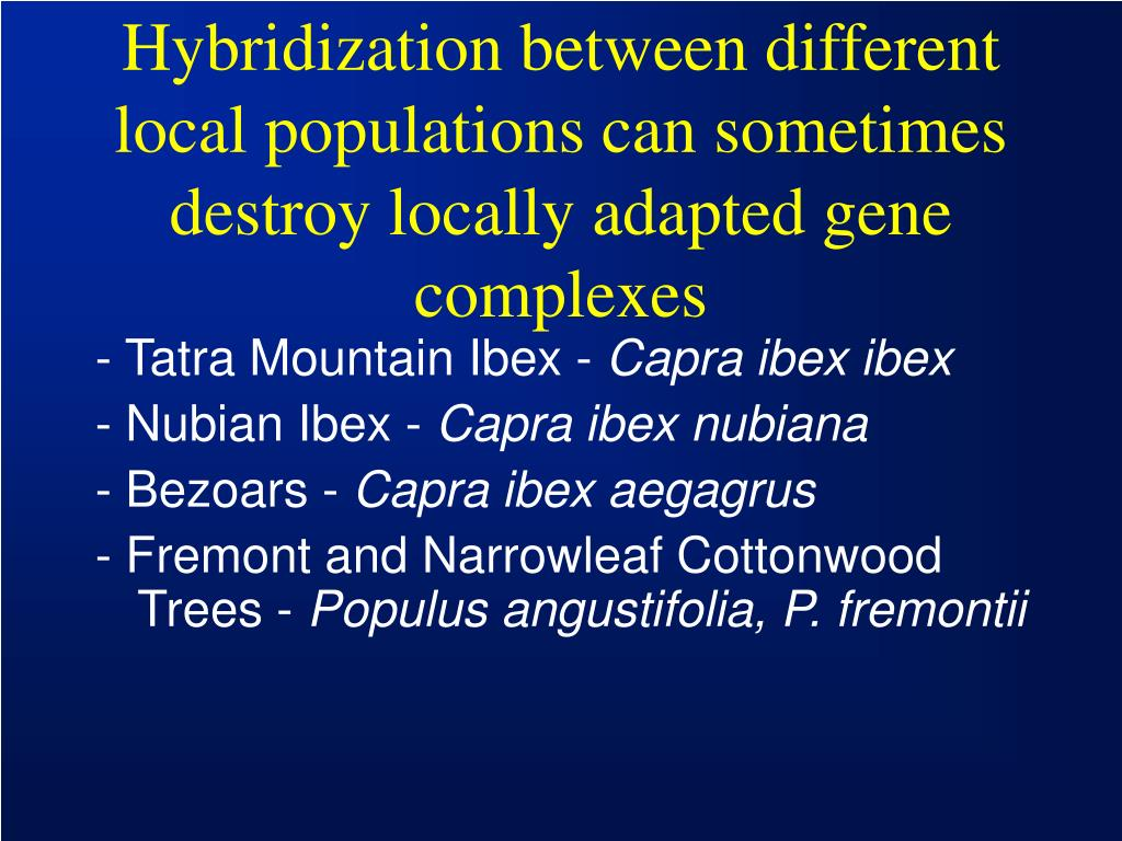 Hybridization between different local populations can sometimes destroy locally adapted gene complexes