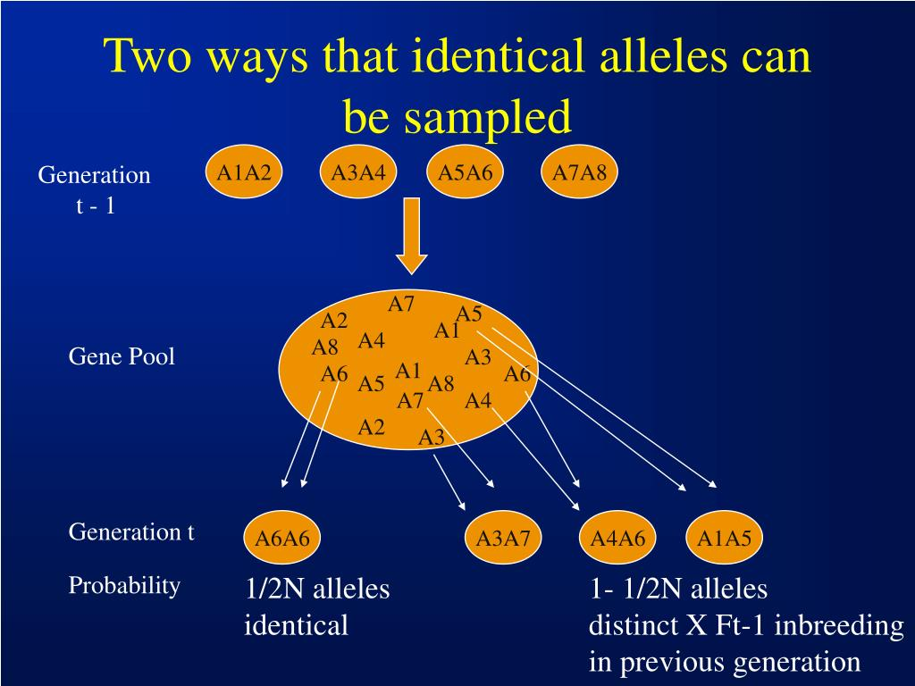 Two ways that identical alleles can be sampled