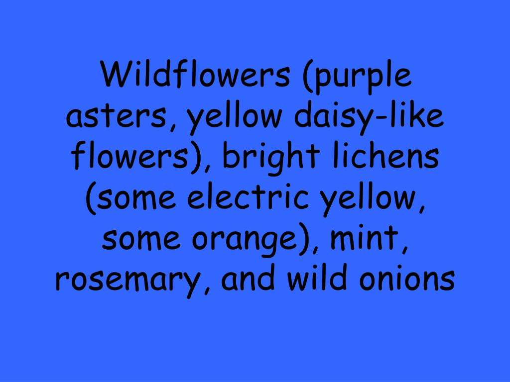 Wildflowers (purple asters, yellow daisy-like flowers), bright lichens (some electric yellow, some orange), mint, rosemary, and wild onions