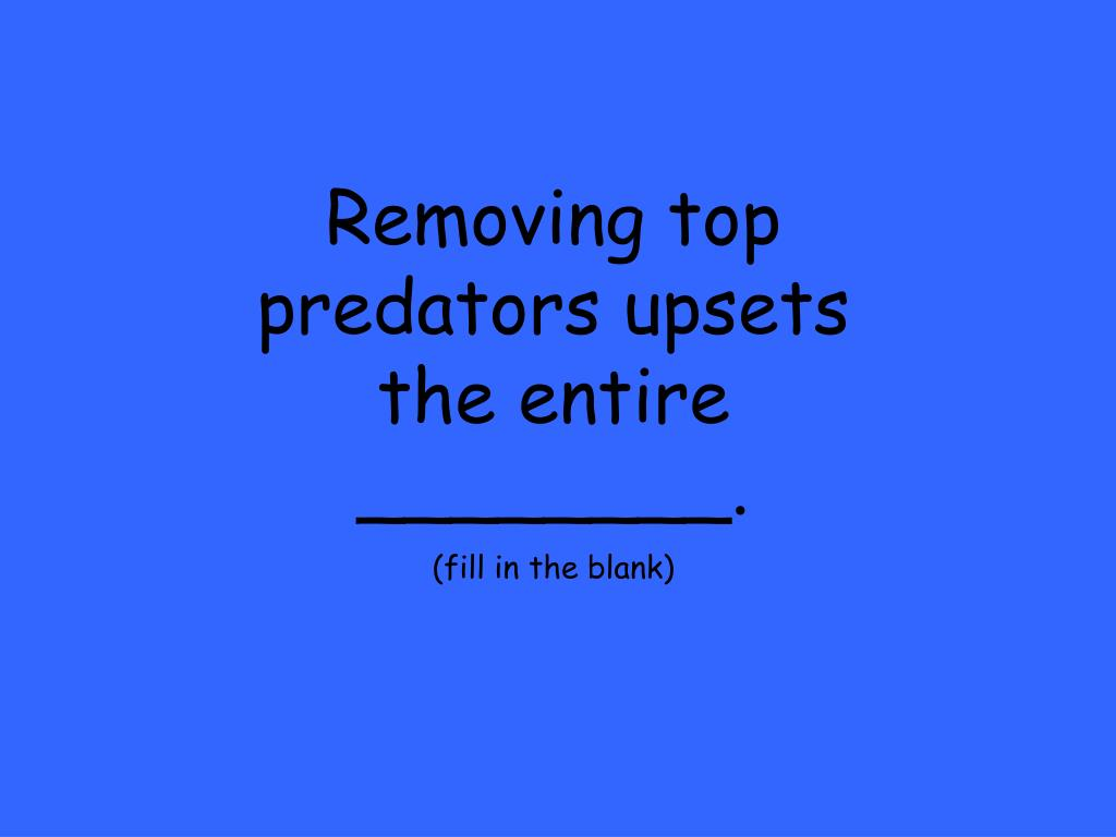 Removing top predators upsets the entire ________.