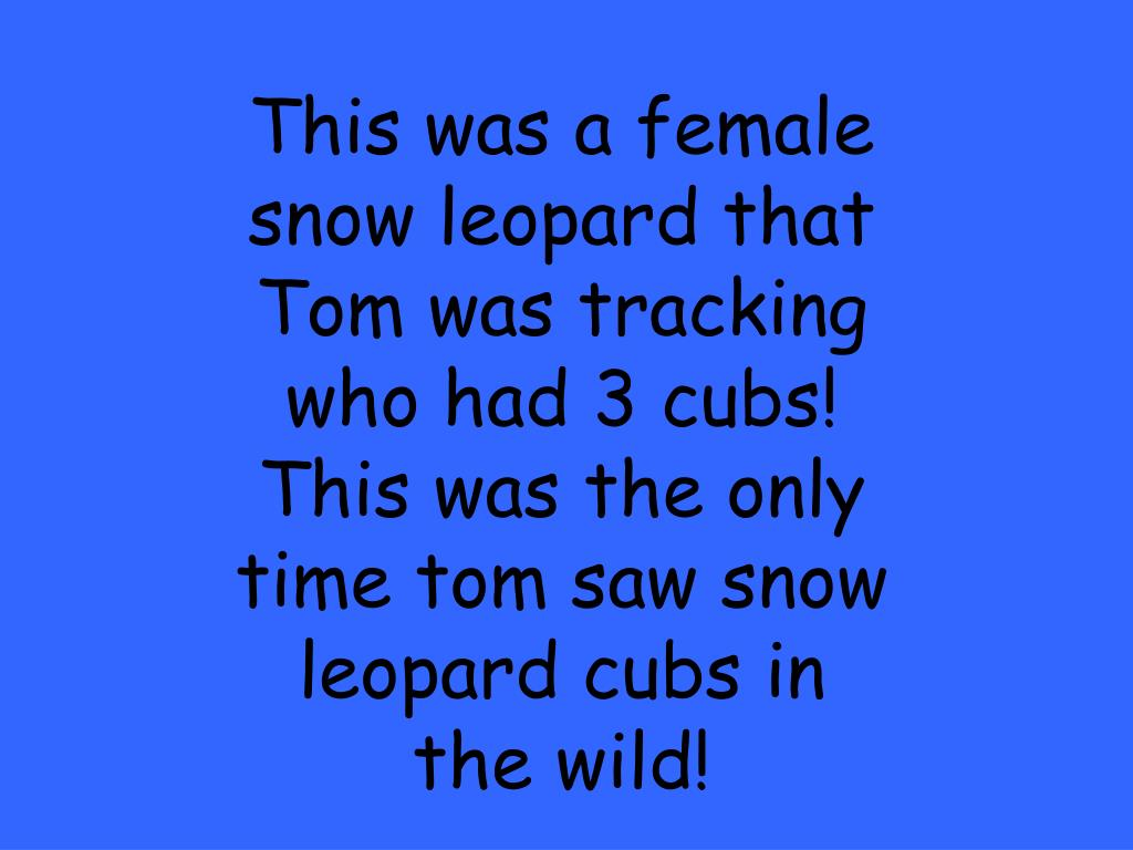 This was a female snow leopard that Tom was tracking who had 3 cubs!  This was the only time tom saw snow leopard cubs in the wild!