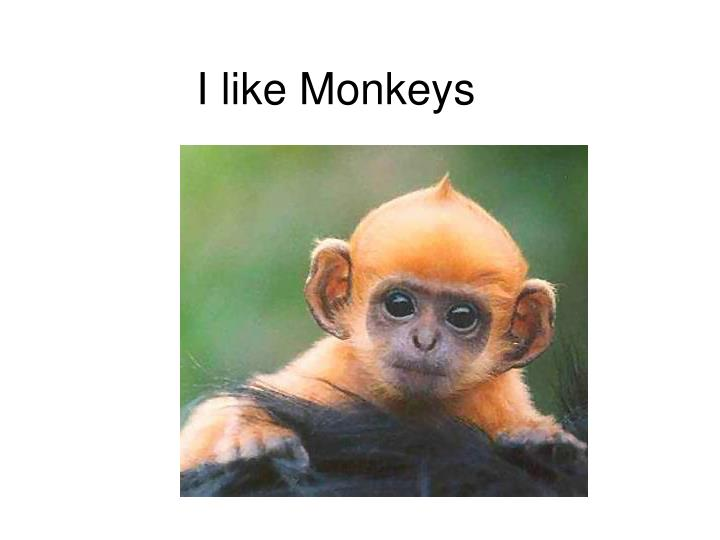I like monkeys