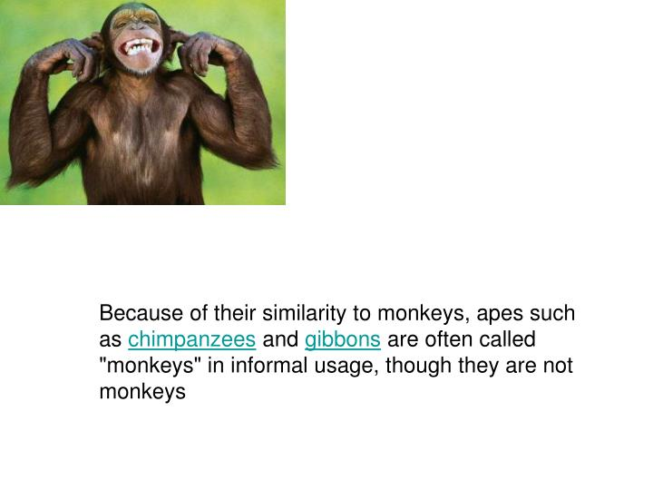 Because of their similarity to monkeys, apes such as