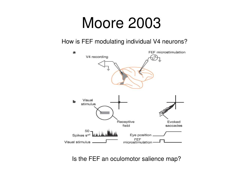 Moore 2003