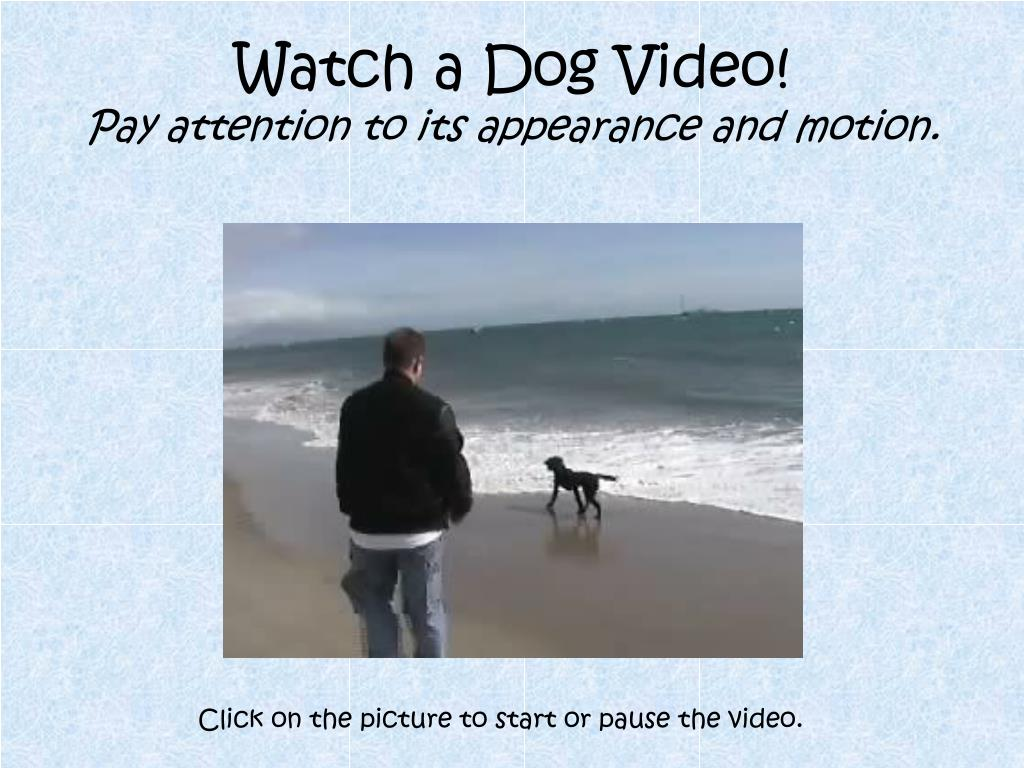 Watch a Dog Video!