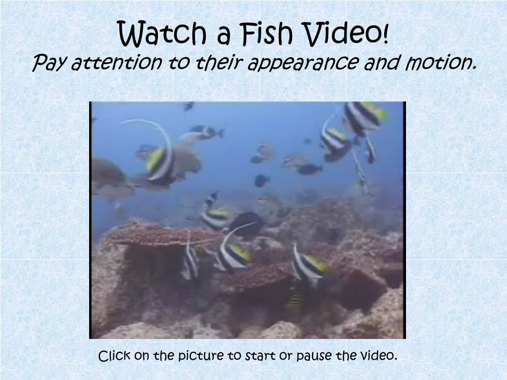 Watch a Fish Video!