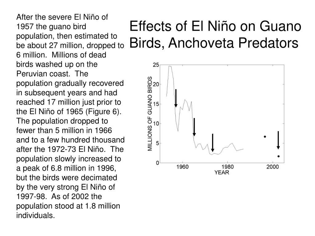 After the severe El Niño of 1957 the guano bird population, then estimated to be about 27 million, dropped to 6 million.  Millions of dead birds washed up on the Peruvian coast.  The population gradually recovered in subsequent years and had reached 17 million just prior to the El Niño of 1965 (Figure 6).  The population dropped to fewer than 5 million in 1966 and to a few hundred thousand after the 1972-73 El Niño.  The population slowly increased to a peak of 6.8 million in 1996, but the birds were decimated by the very strong El Niño of 1997-98.  As of 2002 the population stood at 1.8 million individuals.