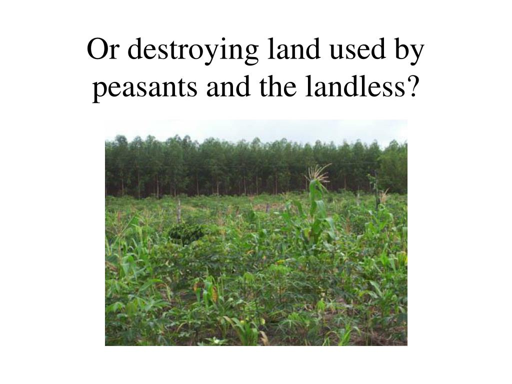 Or destroying land used by peasants and the landless?