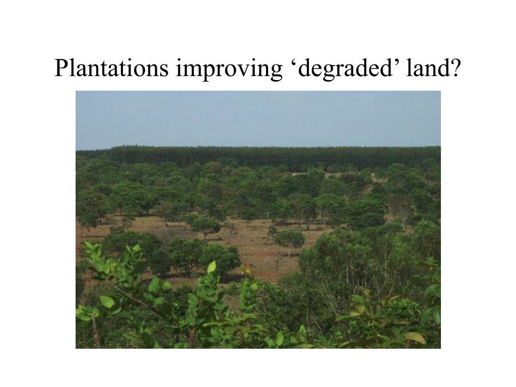 Plantations improving 'degraded' land?
