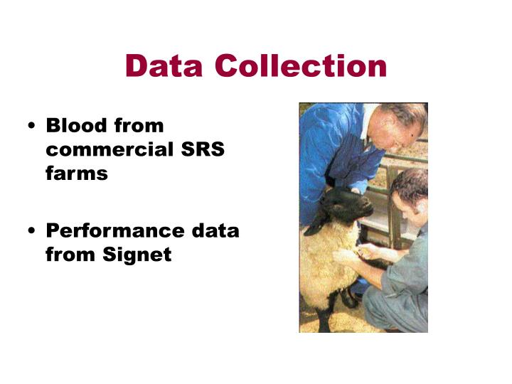 Data collection l.jpg