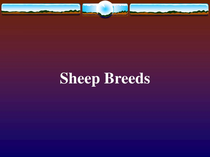 Sheep breeds l.jpg