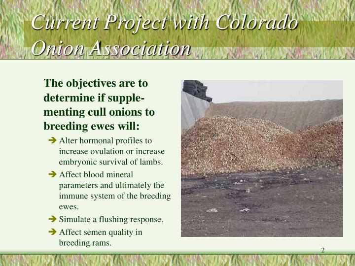 Current project with colorado onion association
