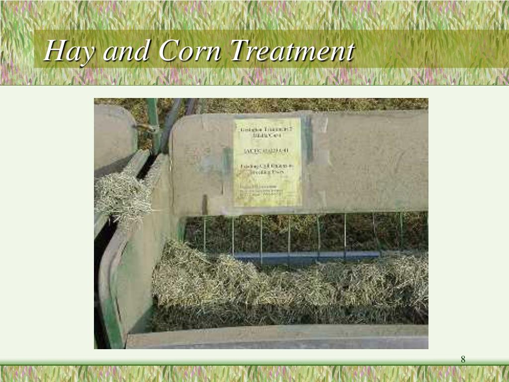 Hay and Corn Treatment