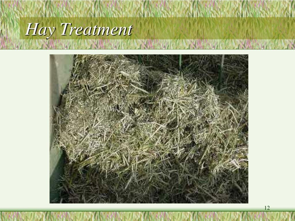 Hay Treatment