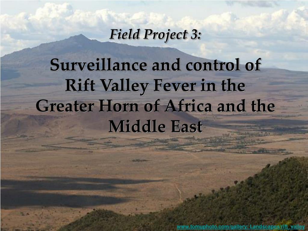 Field Project 3: