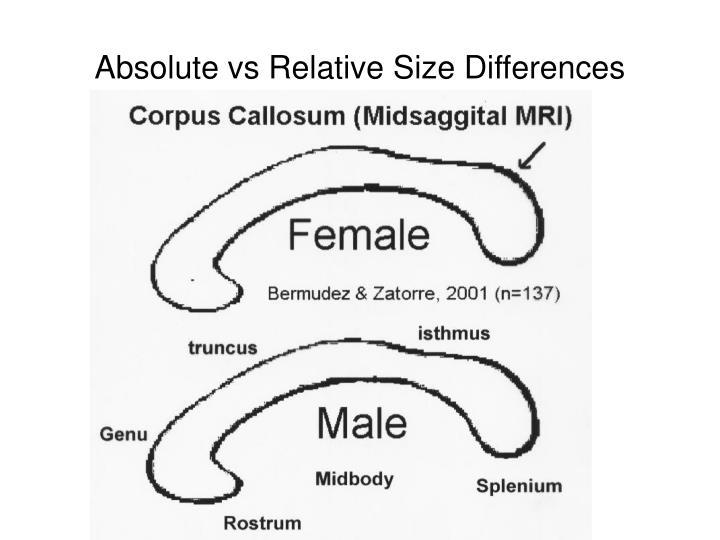 Absolute vs relative size differences