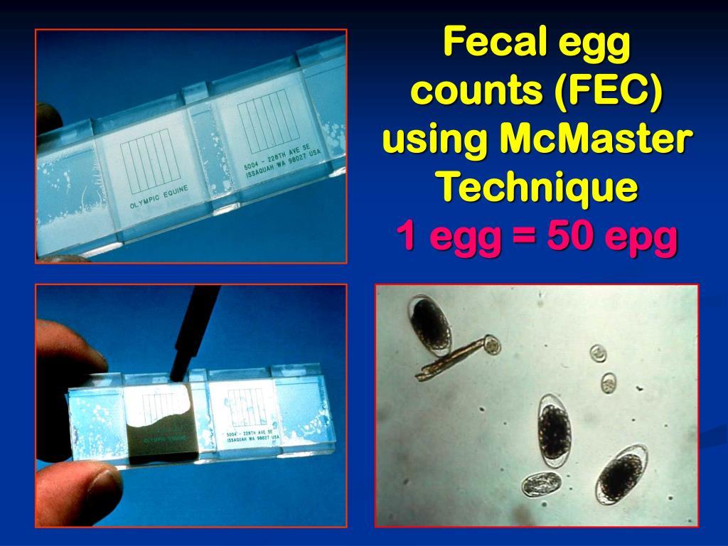 Fecal egg counts (FEC) using McMaster Technique