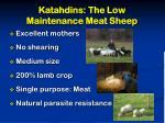 katahdins the low maintenance meat sheep