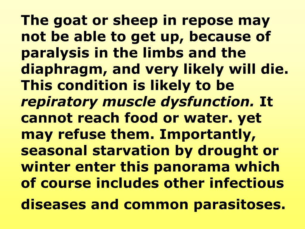 The goat or sheep in repose may not be able to get up, because of paralysis in the limbs and the diaphragm, and very likely will die. This condition is likely to be